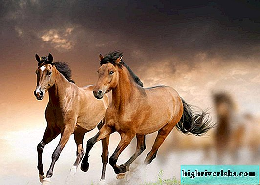 10 informative facts about horses
