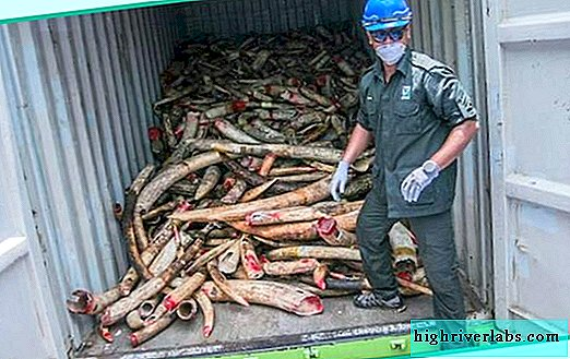 Malaysia destroys 9.5 tons of ivory