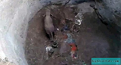 In India, they saved an elephant calf that fell into a 9-meter well
