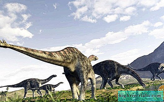 Cetiosaurus. The story of the discovery of this species of dinosaurs