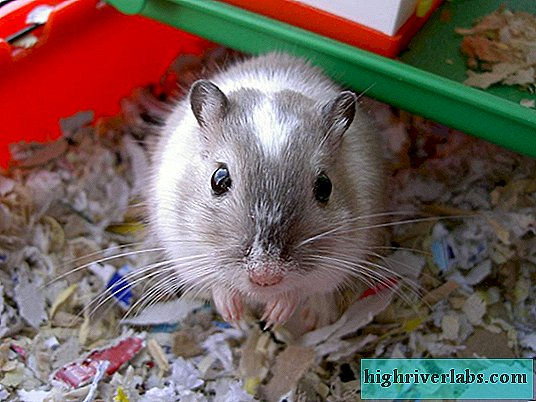 What is recommended to feed the gerbil?
