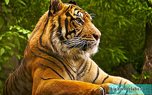 Tiger Day celebrated in Vladivostok