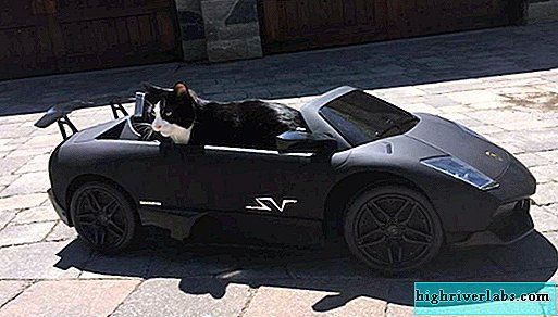 DJ from Canada bought a supercar for a cat