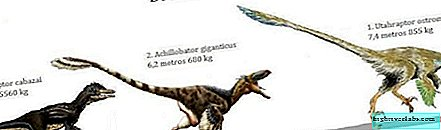 Dromaeosaurids or Raptor