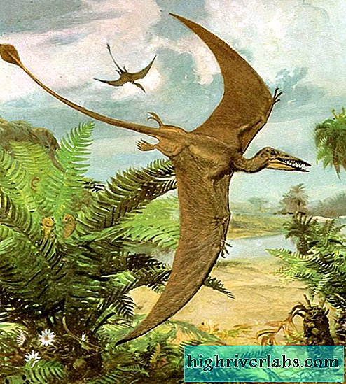 Pterodactyl flying dinosaur