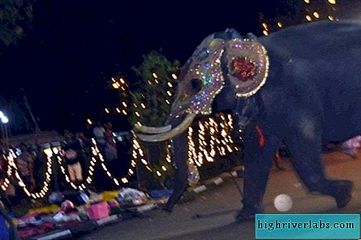 In Sri Lanka, an elephant attacked people