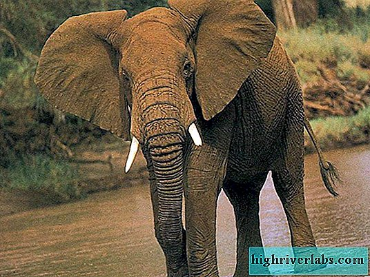 A bit about elephants