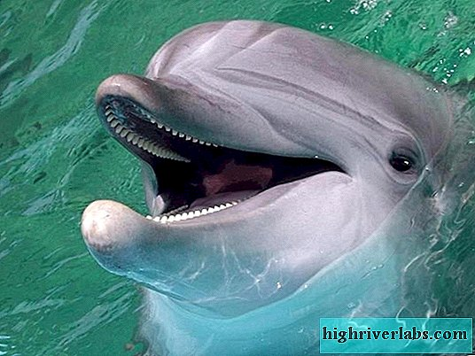 Incredible facts about dolphins and their abilities