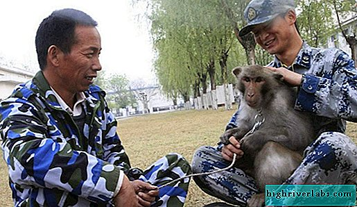 Monkeys help Chinese Air Force fight birds