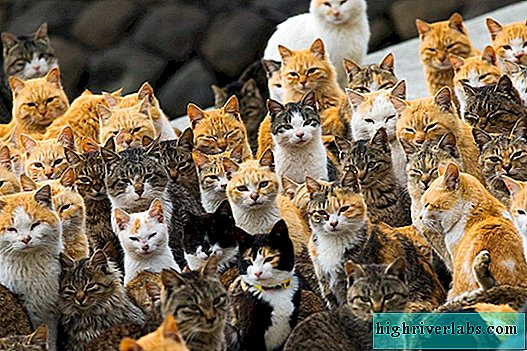 "Another Japanese ""Island of Cats"""