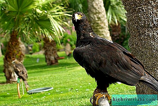 Eagles: types, description, interesting facts about mighty feathered predators