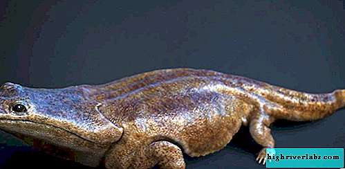 A new species of ancient giant amphibians discovered