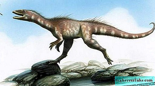 The first predatory dinosaur from Wales