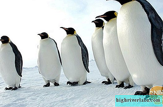 Penguins - Kings of the South Pole
