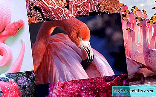 Pink animals: glamor from nature