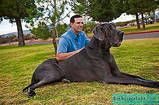 The biggest pets: giant pets and their owners