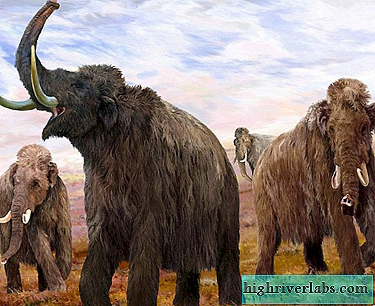 Scientists from Russia want to clone a mammoth