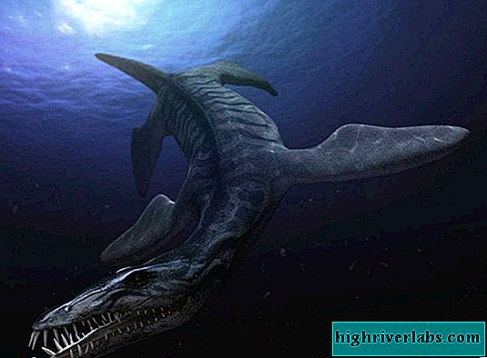 Ulyanovsk scientists will begin the restoration of the remains of a sea lizard
