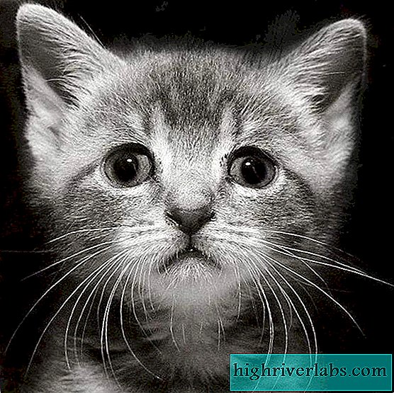 In Chelyabinsk, a store employee killed a small kitten in front of customers