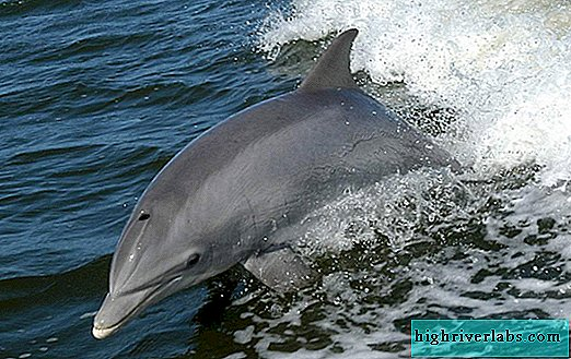 Border guards seized black sea bottlenose dolphins from poachers in Crimea