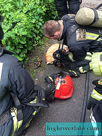 In St. Petersburg, firefighters rescued a cat