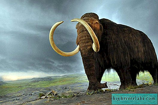 In the US, farmers dug up a woolly mammoth