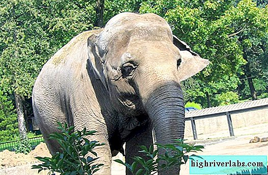 In Thailand, an elephant killed a British tourist