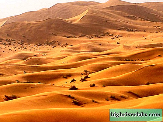 Life of flora and fauna in the Sahara desert
