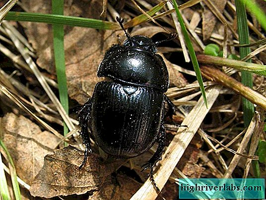 Scarab beetle. Mysticism in the most commonplace