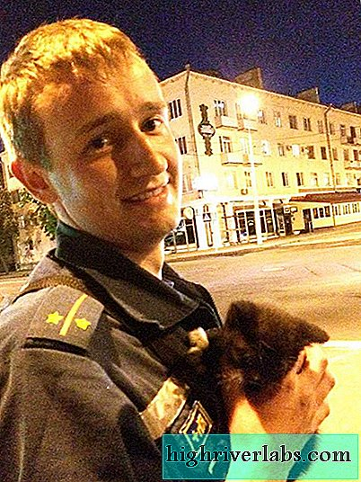 Zoodefenders from Belarus saved a kitten stuck in a street lamp