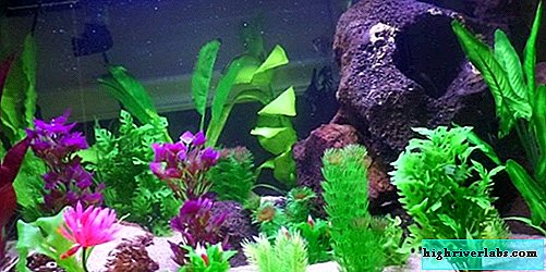 Comment planter des plantes d'aquarium