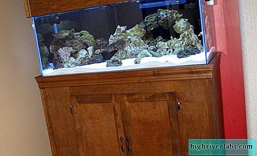 Curbstones under the aquarium: do it yourself