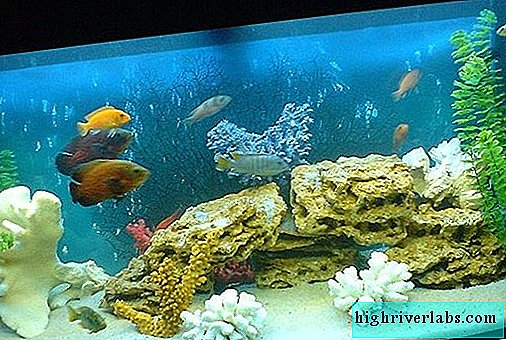 Water hardness in the aquarium and ways to normalize it