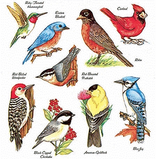 What is a guide for migratory birds?