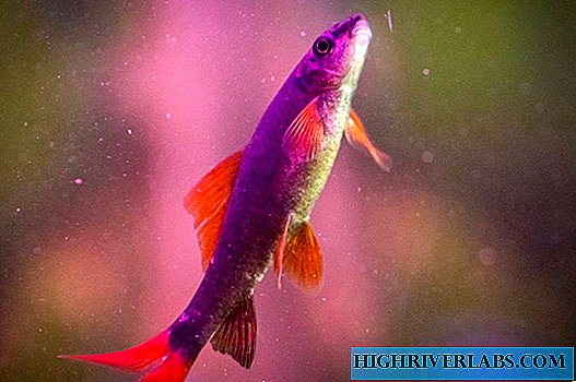 15 fish difficult to maintain (not for beginners)
