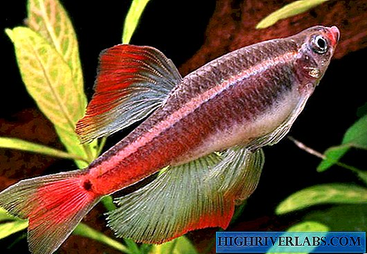 Aquarium water temperature for fish - frequently asked aquarists