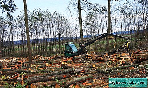 Ecological problems in Russia
