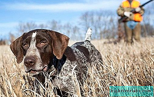 Hunting dog breeds. Descriptions, names and types of hunting dogs