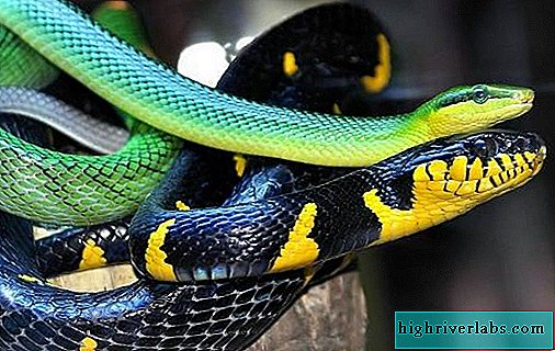 Types of snakes. Description, features, names and photos of snake species