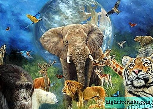 Animals of Africa. Description and names of animals in Africa