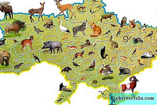 Animals of Ukraine. Description, names and characteristics of animals of Ukraine