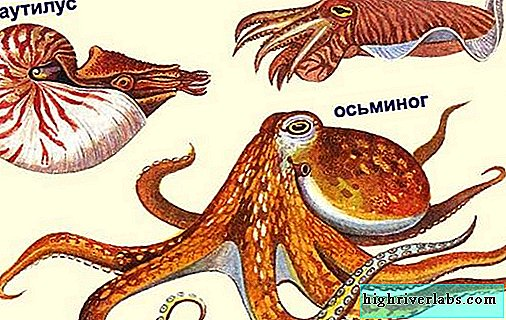 Cephalopods Description, features, types and significance of cephalopods