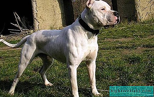 Ghoul dong dog. Description, features, types, nature and price of the gul dong breed