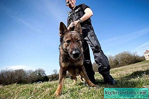 Who is a dog handler? Description and features of the profession dog handler. How to become a dog handler?