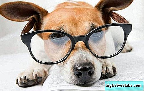 The most intelligent breeds of dogs. Description, names, types and photos of smart breeds of dogs