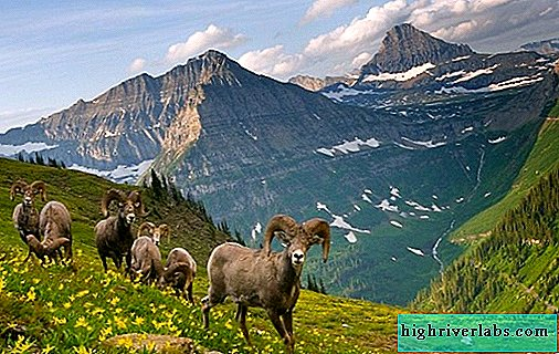 Animals of the Altai Territory. Descriptions, names and characteristics of animals of Altai