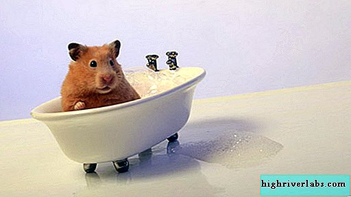 Is it possible to bathe a hamster