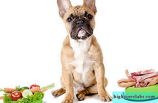 Healthy fruits and vegetables for dogs