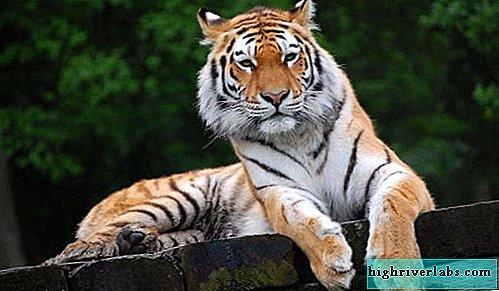 are un ajutor de tigru în pierderea în greutate pierdere în greutate spam mail